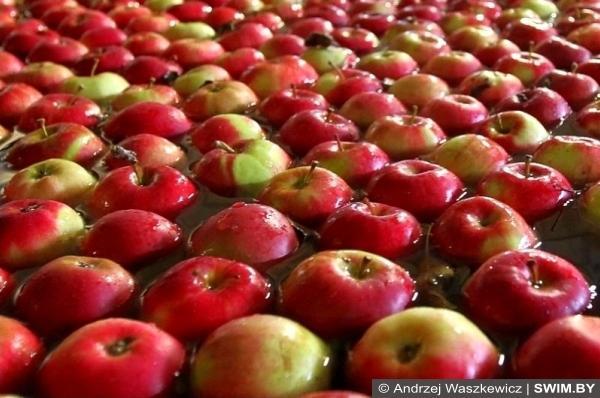 Яблоки, apples, яблоки и плавание