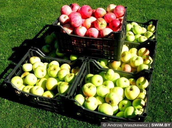 Яблоки, apples, польза яблок