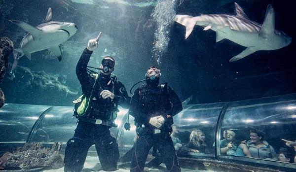 Дания, дайвинг с акулами, Swim.by