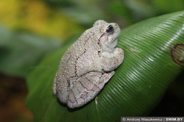 Frogs, лягушки океанариум Лиссабон
