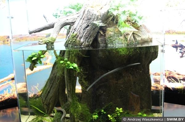 Frogs, лягушки террариум Лиссабон
