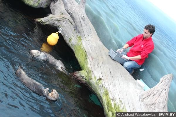 Кормление каланов Лиссабон океанариум