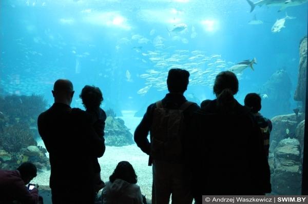 Океанариум в Лиссабоне, аквариум