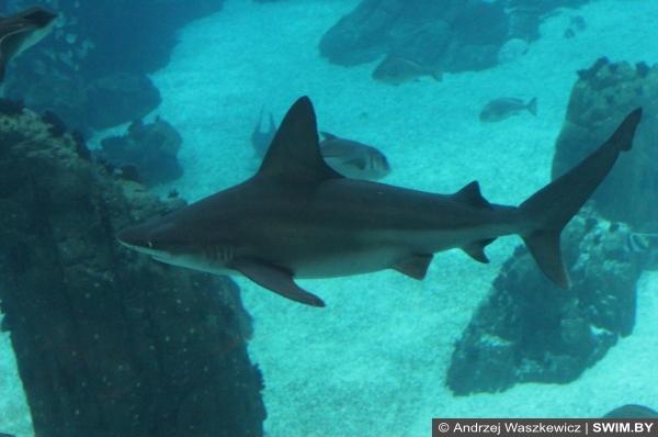 Океанариум в Лиссабоне, акула в аквариуме