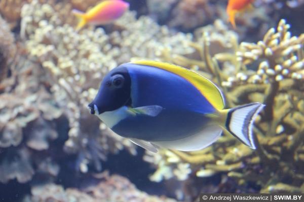 Подводный мир океана Португалия