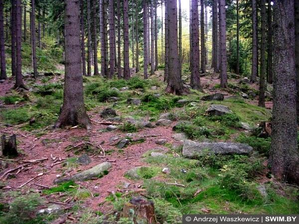Польское кино, магический лес