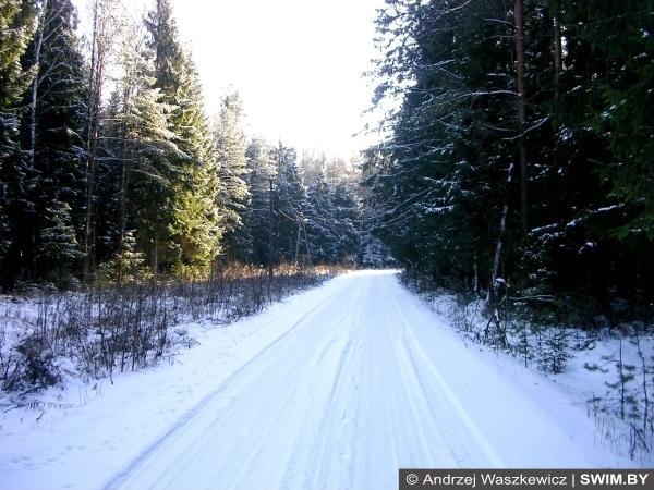 Трек, маршруты, зимний лес