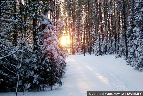 Зима, бег, лыжи, плавание, тренировки swim.by